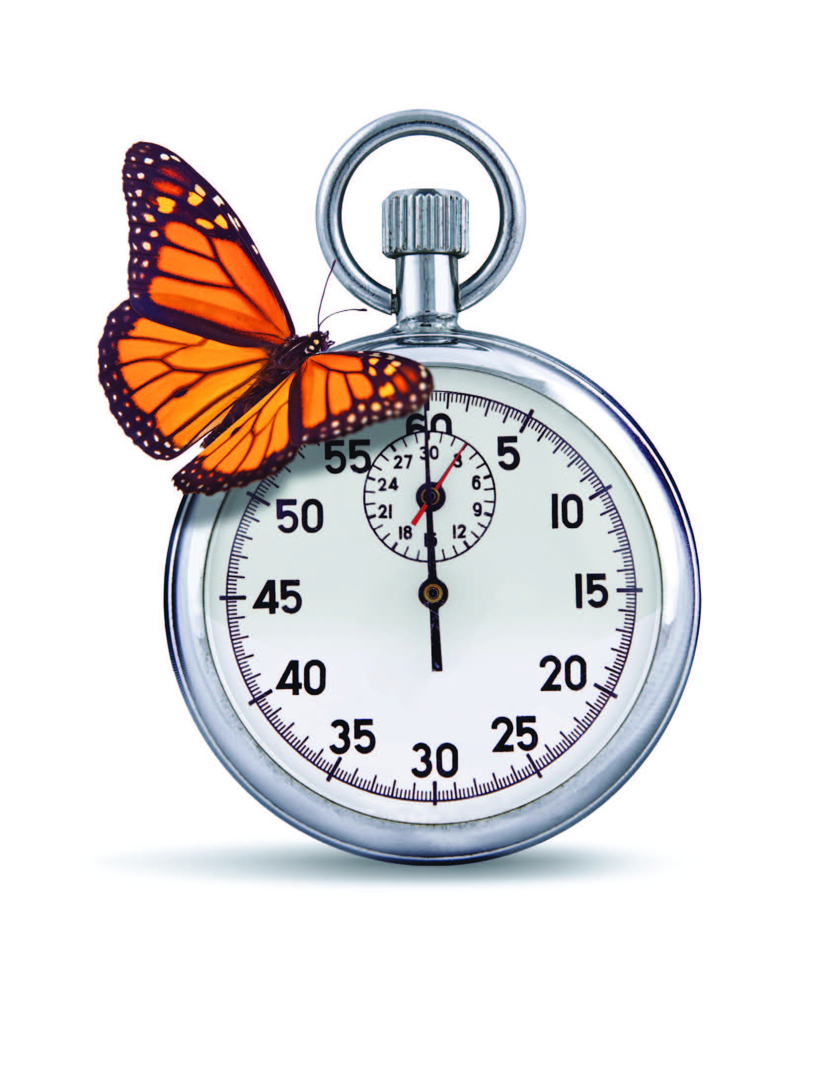 butterfly&stopwatch_hiresFINAL[1]